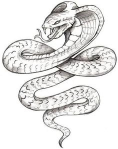 Drawn snake angry snake Snake tattoo sketch  drawing