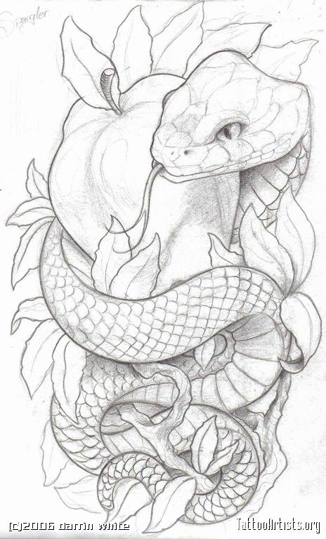 Drawn snake angry snake Have of tattoos Pinterest and