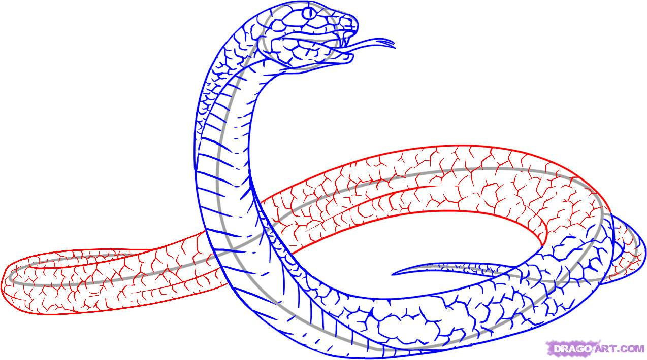 Black Mamba clipart open mouth A Animals Draw Step Snakes