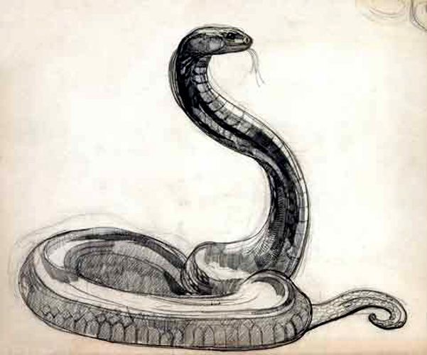 Drawn snake chinese snake Pinterest are Snakes a The