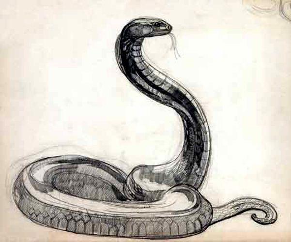 Drawn snake chinese snake Pinterest snake Snakes 2013 117
