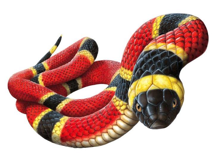 Drawn snake coral snake Custom Poisonous Pinterest : best