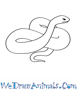 Drawn snake female  Snake Eastern Draw to