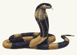 Drawn snake egyptian cobra Egyptian Reptiles Cobra Pinterest Cobra