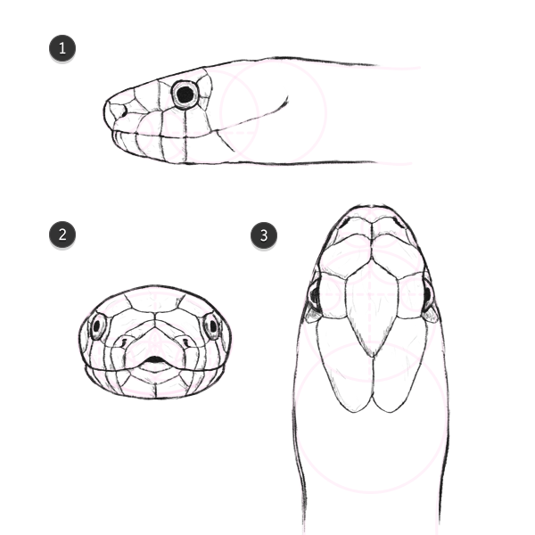 Drawn snake front view Head Patterns 2 Snakes Cybro