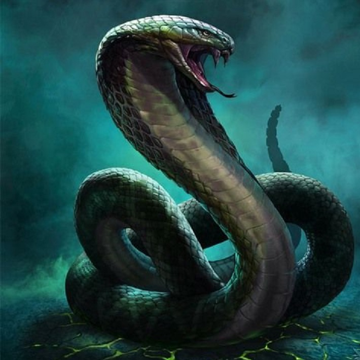 Drawn snake giant snake Of the deadly whole in