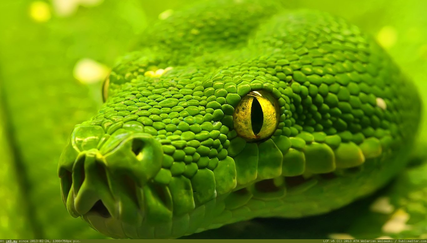 Drawn snake green Draw How Their Animals: to