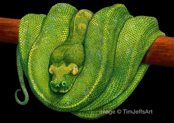 Drawn snake green Pencil Python by Drawing Colored