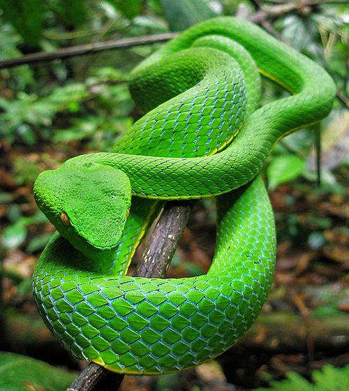 Drawn snake green Images best on Snakes Snake
