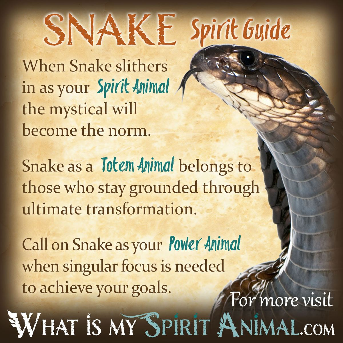 Drawn snake mean & Totem Snake Meaning Animal