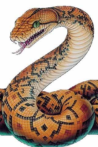 Drawn snake python snake To How on Draw MoboMarket