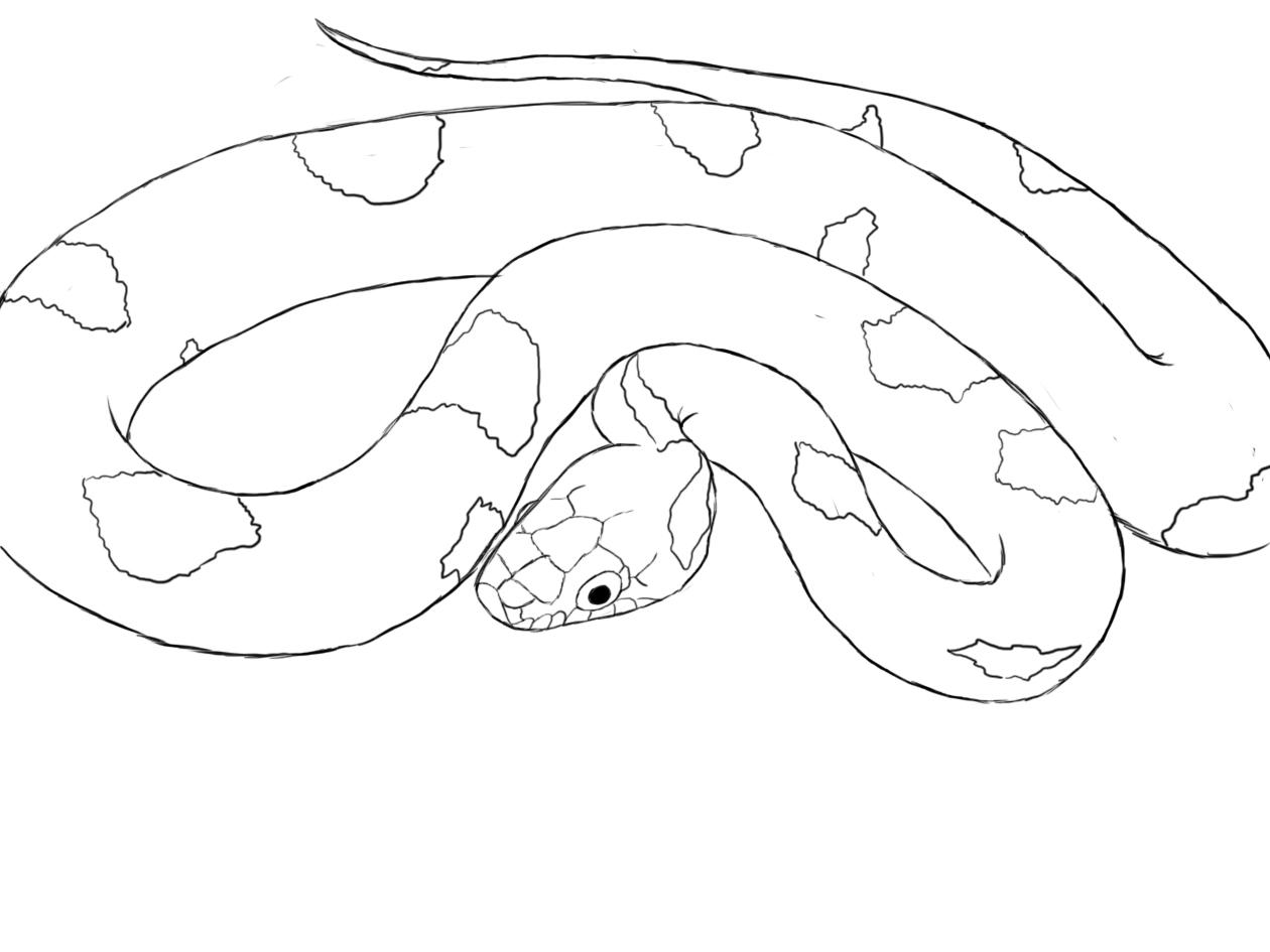 Drawn snake python snake Drawing Python Snake snake drawing