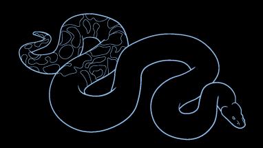 Drawn snake python snake 10 How Easy How Step