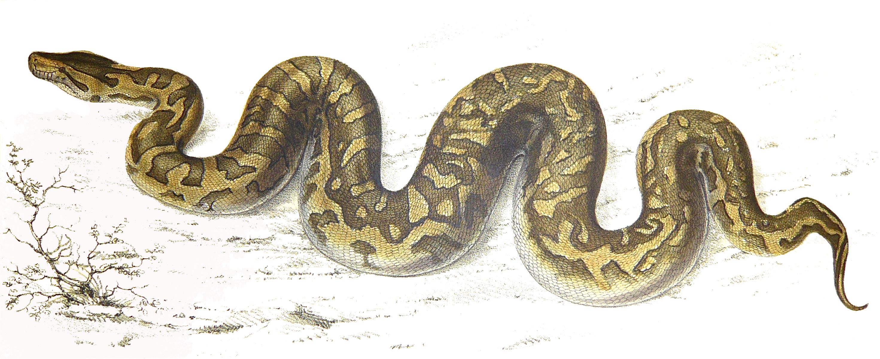 Drawn snake python snake Hand By Brave By kids
