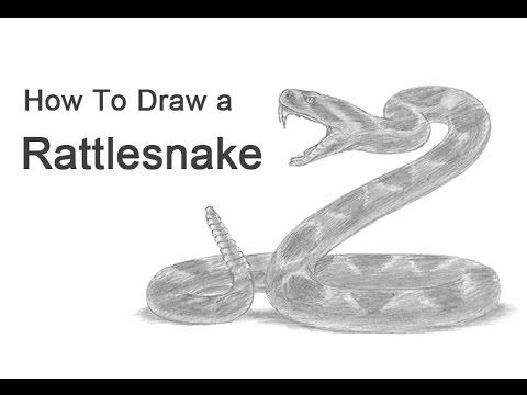 Drawn snake rattlesnake A Rattlesnake) (Diamondback Snake YouTube