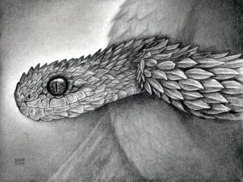 Drawn snake realistic Atheris Step Hispida to by