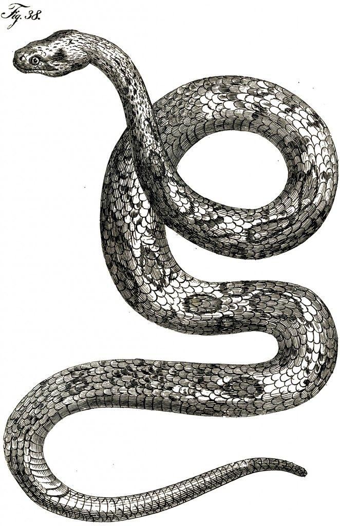 Drawn snake slytherin Snake on SLYTHERIN · images