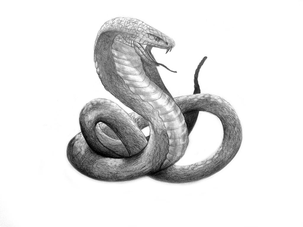 Drawn snake slytherin By DeviantArt by Slytherin on