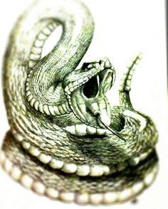 Drawn snake snake strike Drawing drawing Rattlesnake Rattlesnake strike