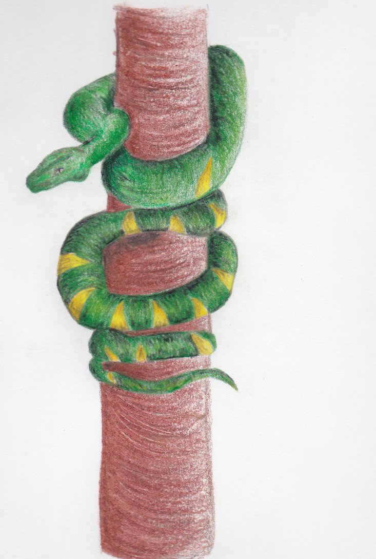 Drawn snake tree drawing Around DeviantArt on wrapped tree