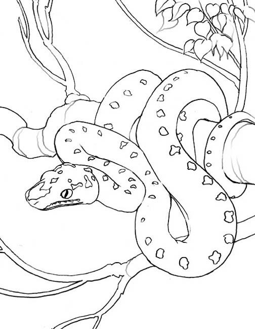 Drawn snake tree drawing Snake coloring Download Tree Snake