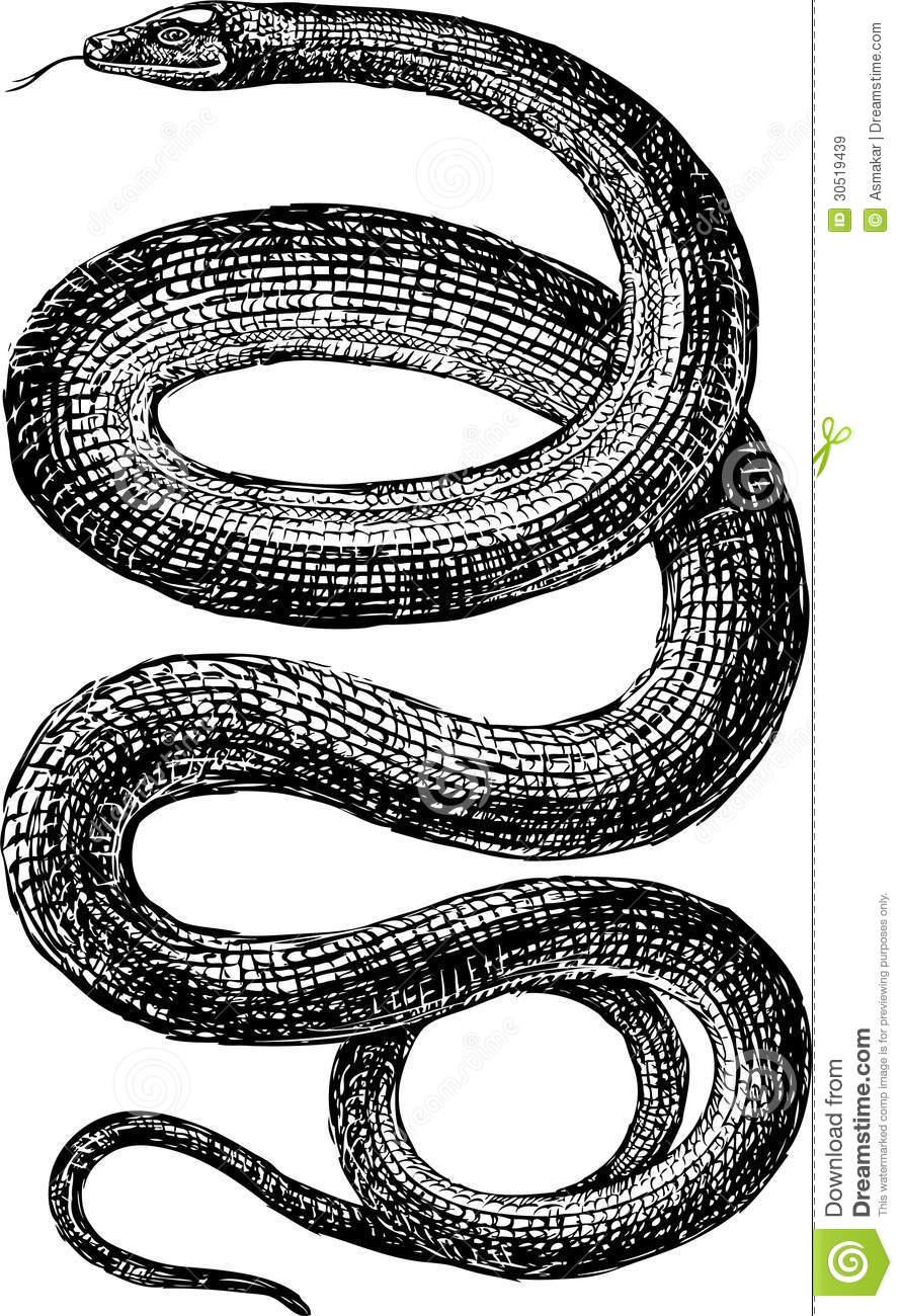 Drawn snake vector art 30519439 drawing big vector jpg