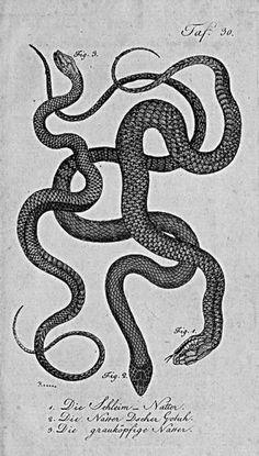 Drawn snake vintage Pinterest art / Pinterest supersonic