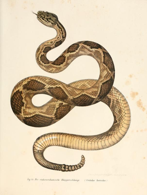 Drawn snake vintage On best on 65 images