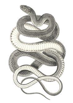 Drawn snake vintage $15 Those ~  beauty