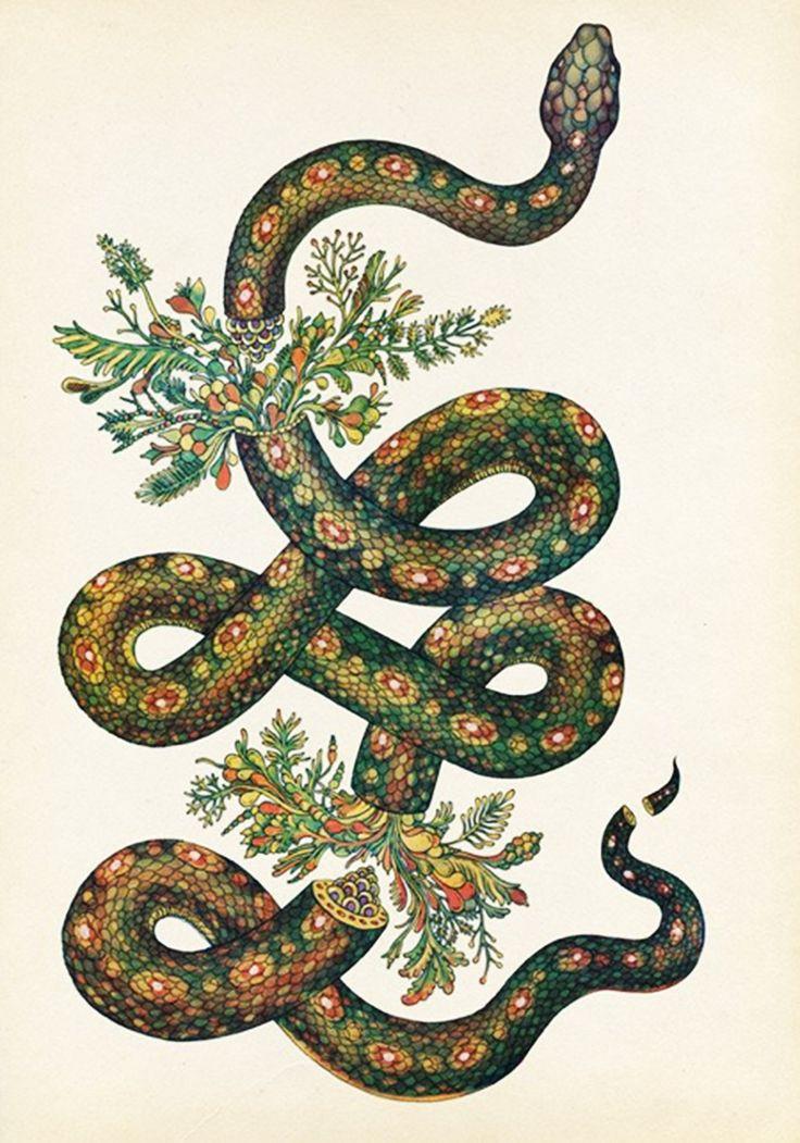 Drawn snake vintage Best peacock of Pinterest 25+