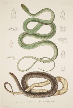 Drawn snake vintage Snake Search  Google More
