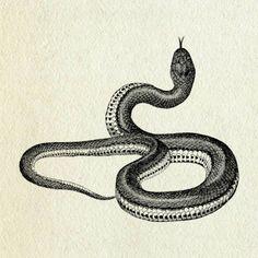 Drawn snake vintage Animal 2 Grayish  Reptile