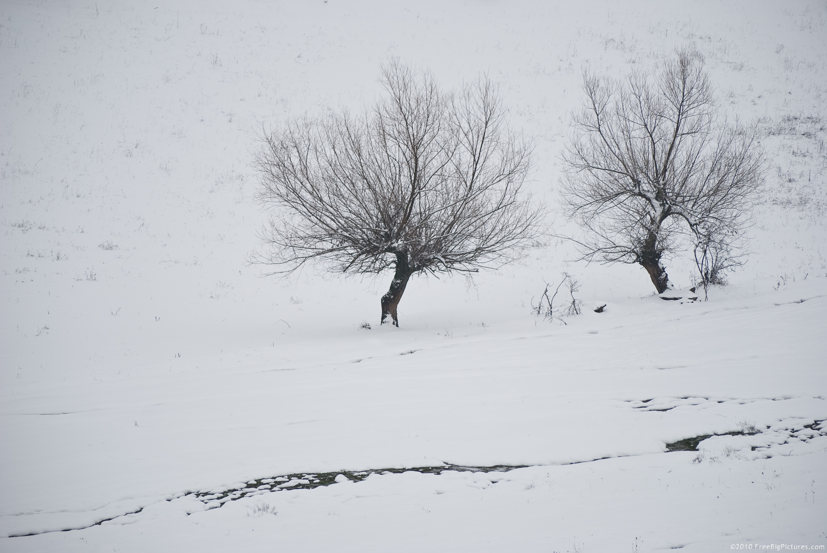 Drawn snow Drawn Trees