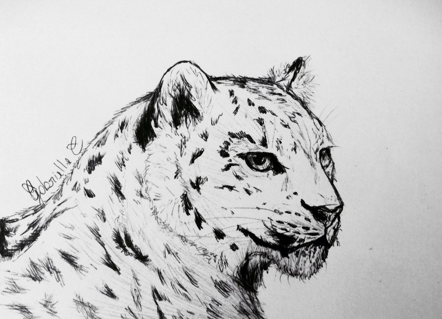 Drawn snow leopard Pen Snow Drawn DeviantArt Drawing