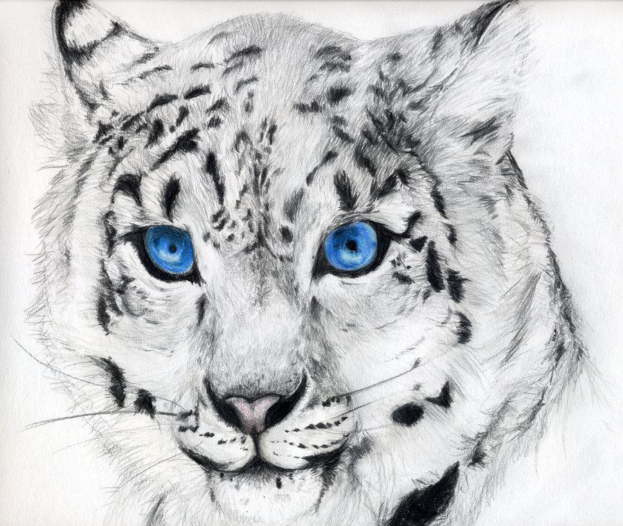 Drawn snow leopard Stare::Snow ::Ice Leopard Stare::Snow Leopard