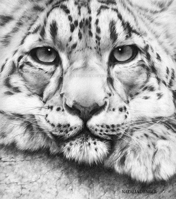 Drawn snow leopard PRINT Leopard Animal Wild 8x10