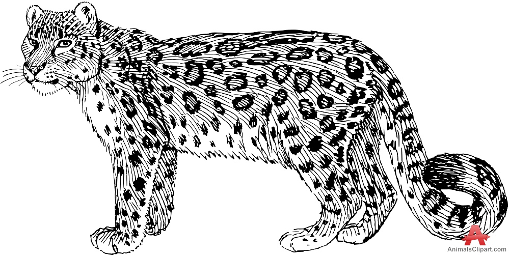 Drawn snow leopard Drawing Snow Clipart Free Clipart