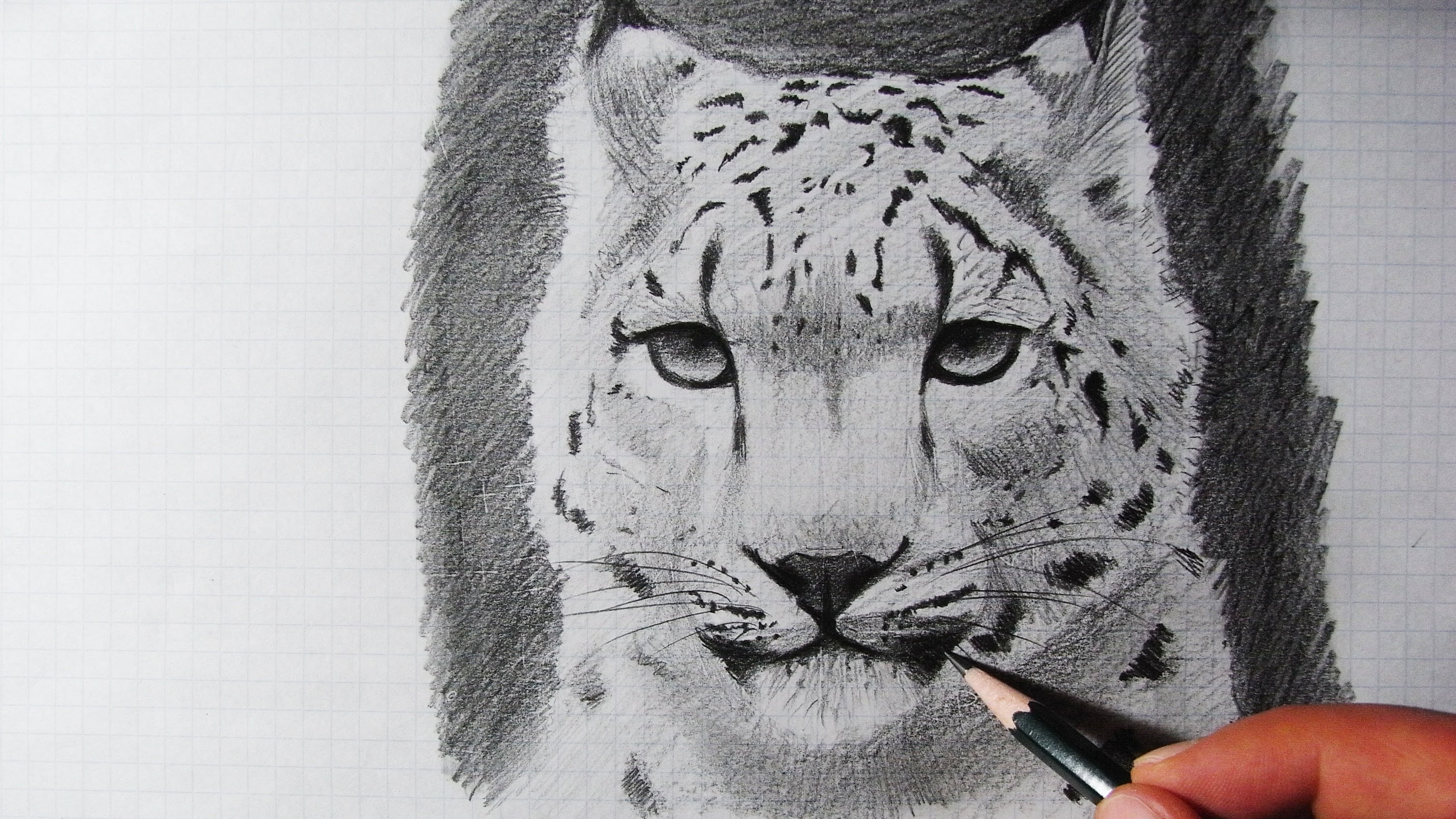 Drawn snow leopard Draw How How Zeichnen a