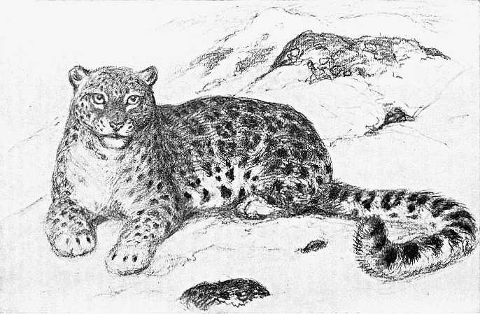 Drawn snow leopard Drawing Snow photo#26 Leopard Snow