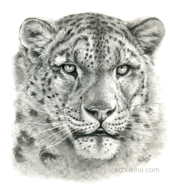 Drawn snow leopard By Snow =sschukina by =sschukina