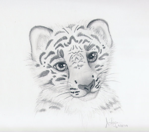 Drawn snow leopard baby Leopard Drawing Cute snow drawing