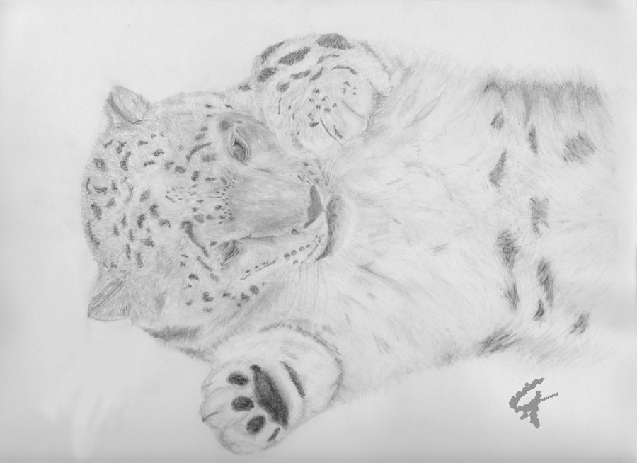 Drawn snow leopard baby Snow leopard photo#6 drawing Baby