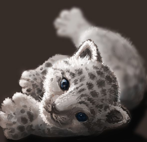 Drawn snow leopard baby Best images about Baby Leopard