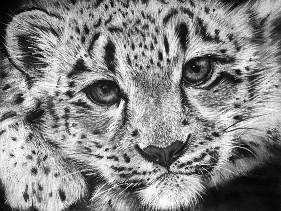 Drawn snow leopard baby Drawing Wood Sharlena by Baby