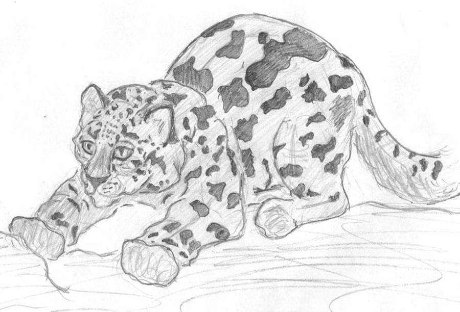 Drawn snow leopard baby Cub Wells Caitlin by Drawing