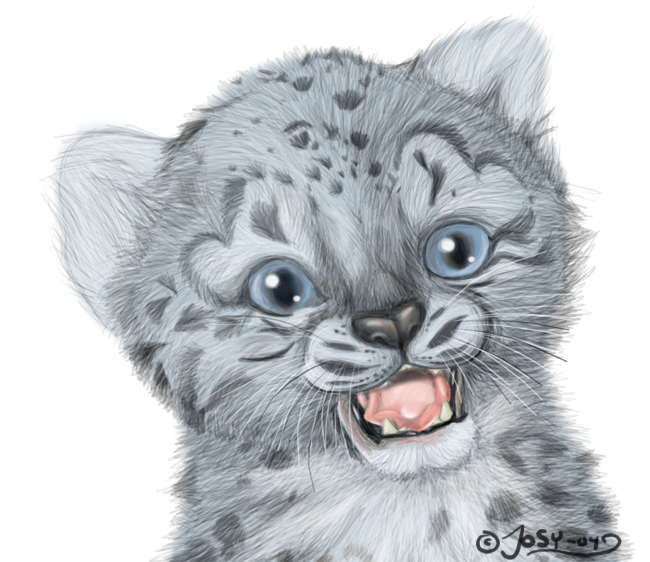 Drawn snow leopard baby Cute snow drawing leopard photo#7