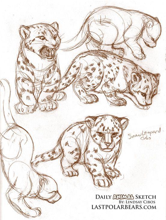 Drawn snow leopard baby Ideas WARM This Best Best