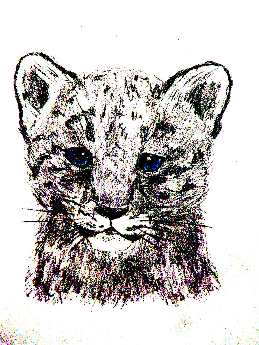 Drawn snow leopard baby Cute Snow Drawing Leopard Baby