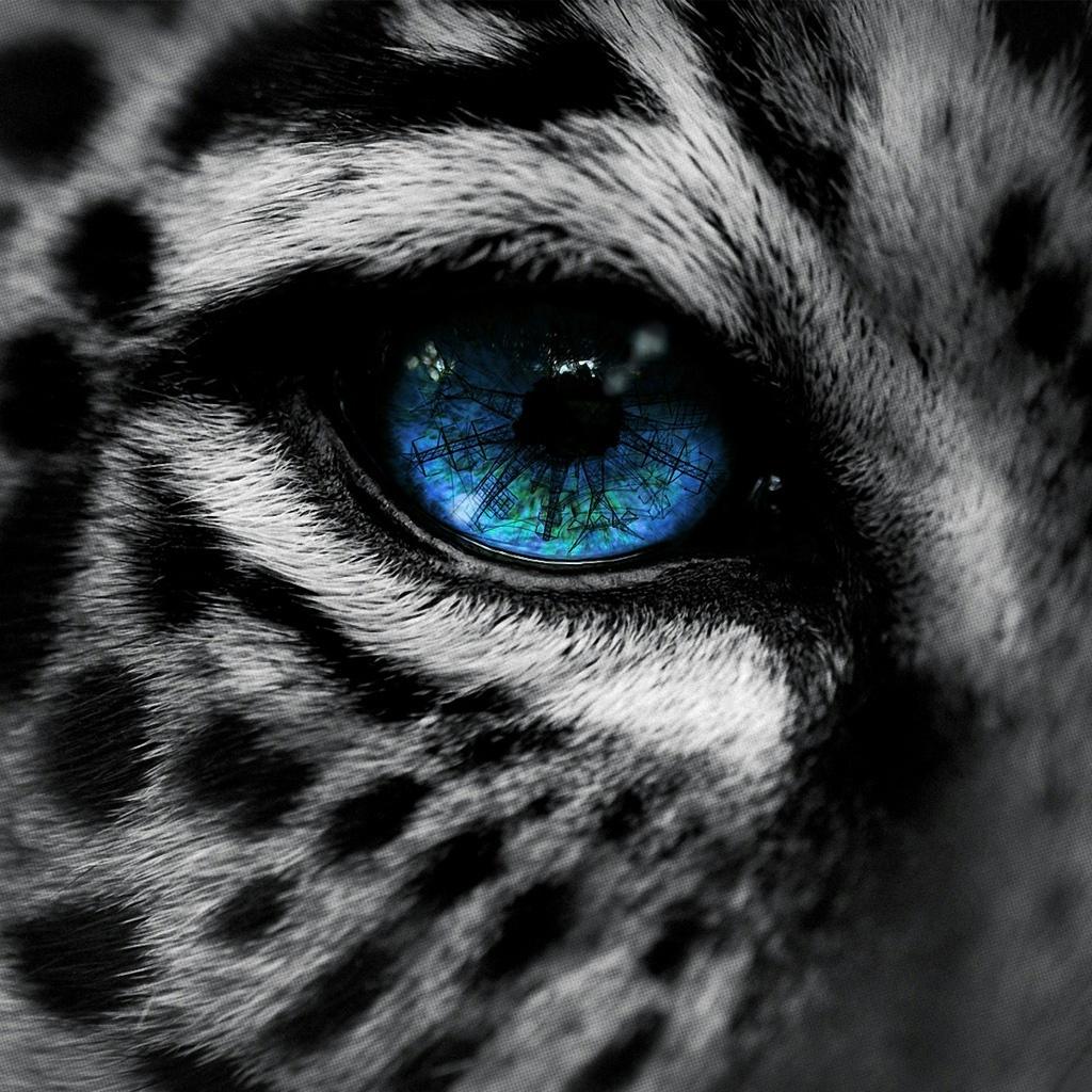 Drawn snow leopard blue eyed Eyes blue Eye eye Leopard