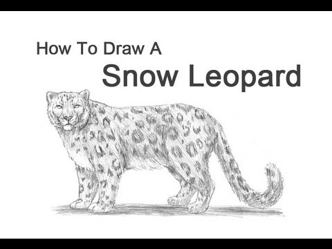 Drawn snow leopard cartoon A from YouTube Unsubscribe Leopard